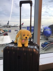 Brian the Pekingese plush toy waiting at airport